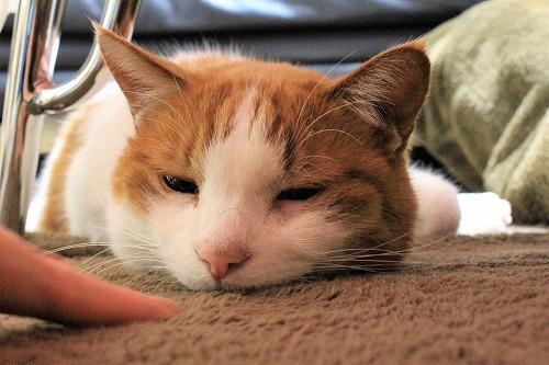 ブログNo.916(お利口さん&潰れ猫&おまけ♪)6