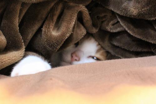 ブログNo.915(春なのに潜り猫)4