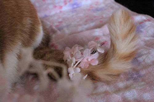ブログNo.923(お誕生日記念撮影秘話)12