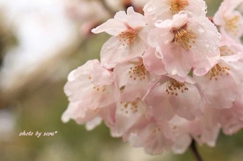 ブログNo.927(気温に現れる猫の態度&春)10
