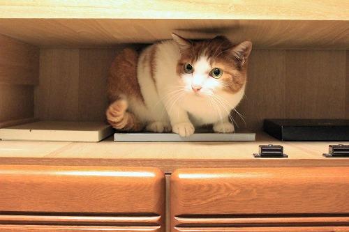 ブログNo.935(好奇心旺盛な猫)2