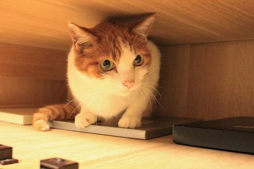 ブログNo.935(好奇心旺盛な猫)4