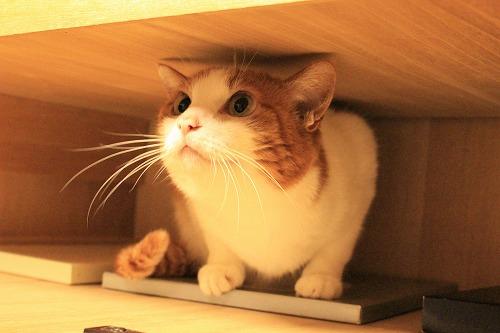 ブログNo.935(好奇心旺盛な猫)6