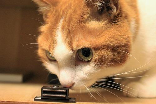 ブログNo.935(好奇心旺盛な猫)8