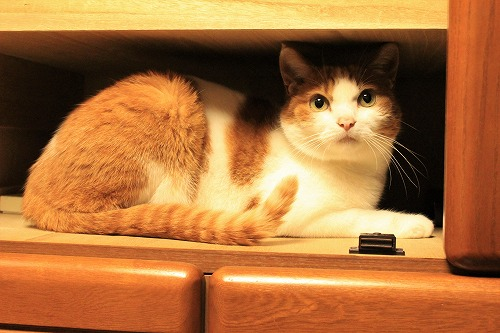ブログNo.935(好奇心旺盛な猫)12