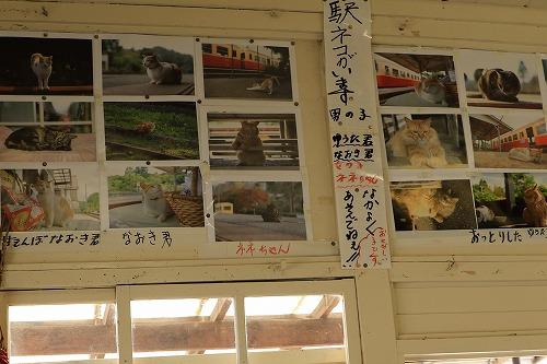 ブログNo.877(ローカル線の駅猫写真集にゃん♪)7