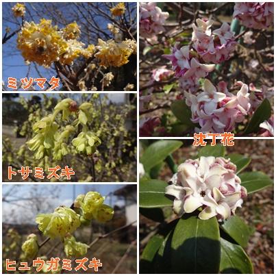 木の花290331