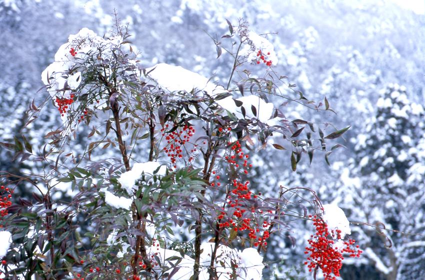雪の美山04