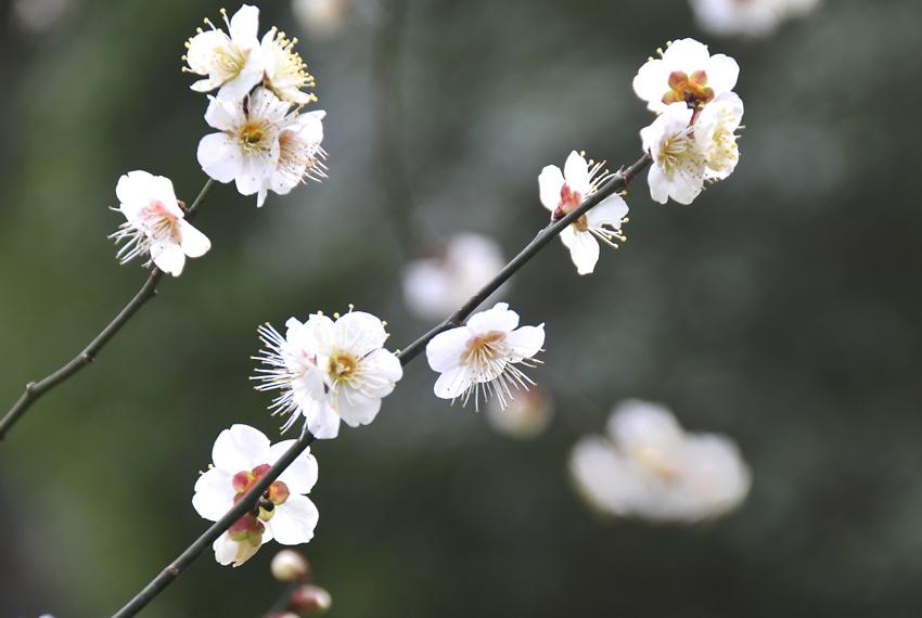 岡山後楽園01
