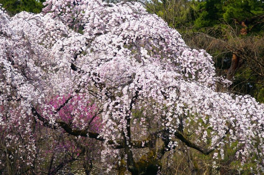 京都御苑03