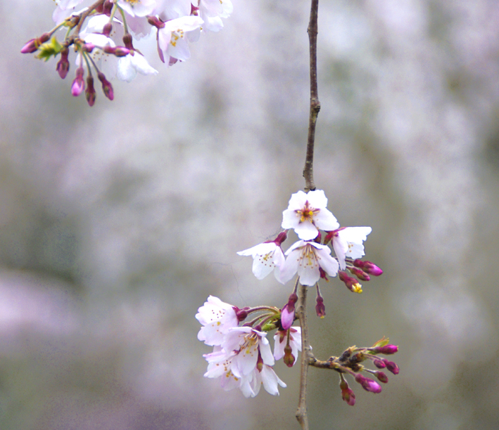 京都御苑02