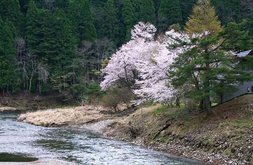 春色(花脊)a