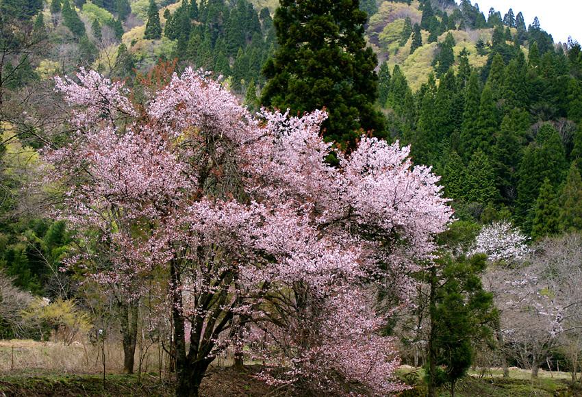 春色(花脊)b