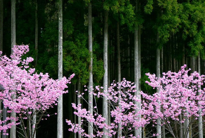 春色(花脊)c
