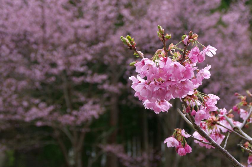 春色(花脊)d
