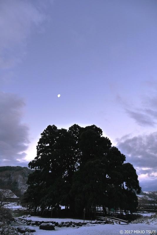 絶景探しの旅 - 0130 蒼白の御仏供杉 樹齢680年の名木百選さかさ杉 (石川県 白山市)