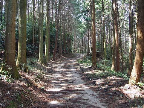yamanomichi3.jpg