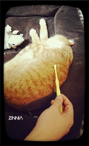 歯ブラシ★