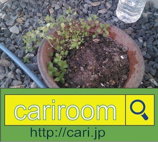 moblog_0f8315f1.jpg