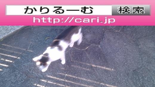 moblog_686c6d59.jpg