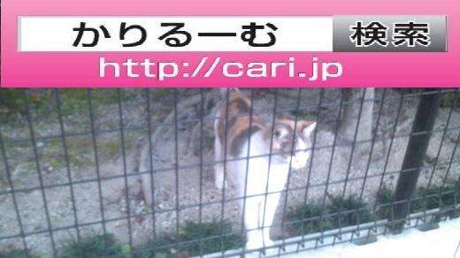 moblog_cf0e6daf.jpg
