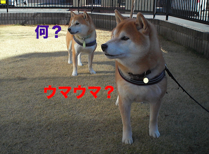 IMG0282-2.png