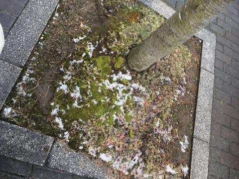 2017-03-16_17-15-22.jpg