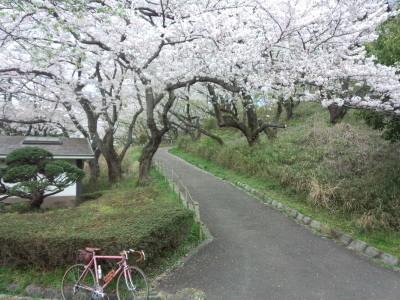 photo_derosa_mituike_sakura_0413_2_2017_0413.jpg