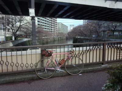 photo_derosa_tokyo_sakura_0402_3_2017_0402.jpg