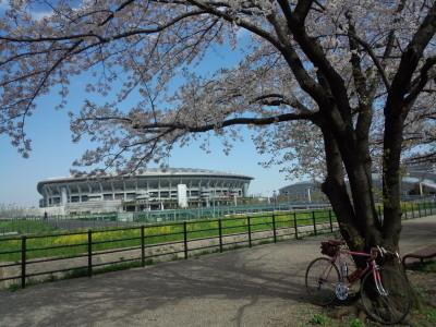 photo_derosa_turumigawa_sakura_0413_7_2017_0413.jpg