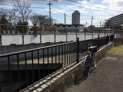 photo_randner_nigaryoumomo_0311_15_2017_0311.jpg