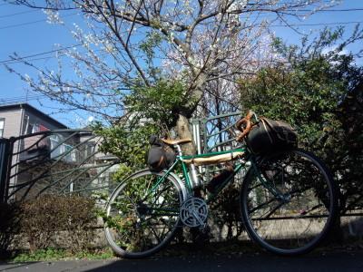 photo_randner_yururipota_hana_0227_11_2017_0227.jpg