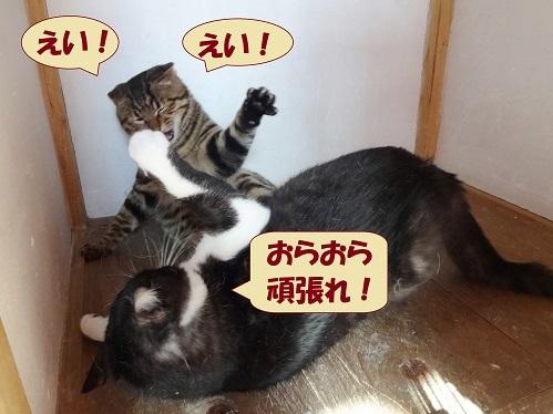 ぎんなん・船長2