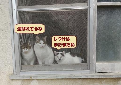 おはぎ・げんじ・チョビ子1