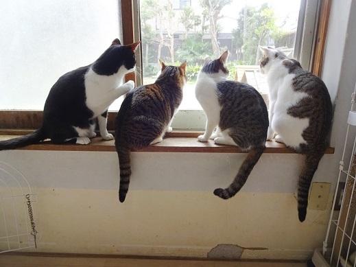 子猫部屋1