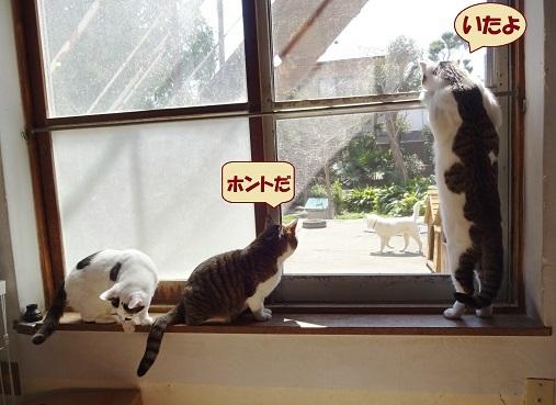チョビ子・ポム・げんじ