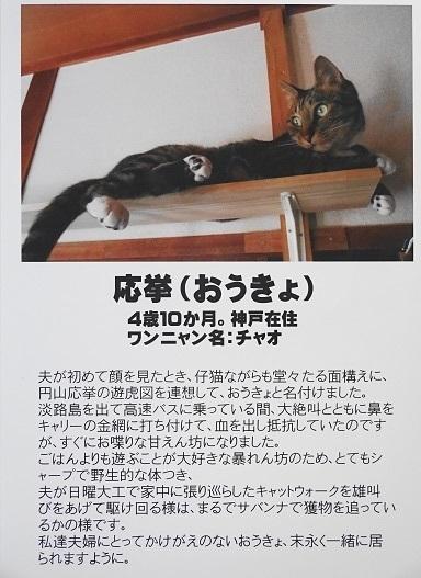 おうきょ(チャオ)