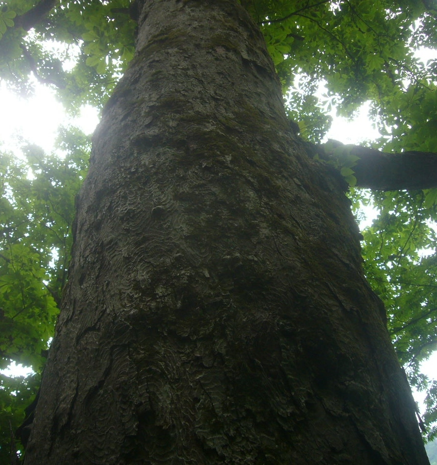 金の成る木