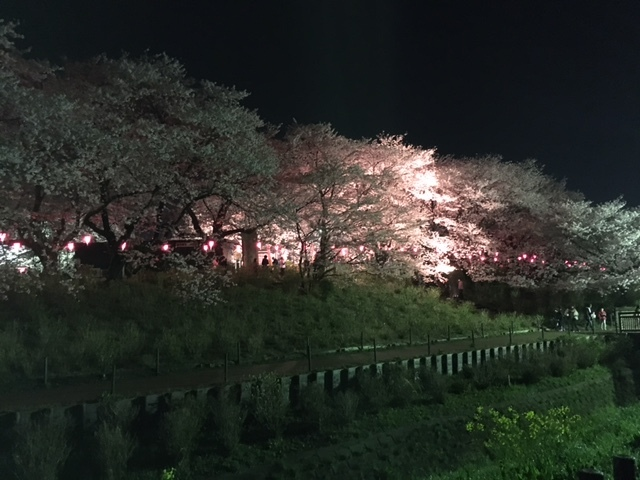 yozakura1.jpg