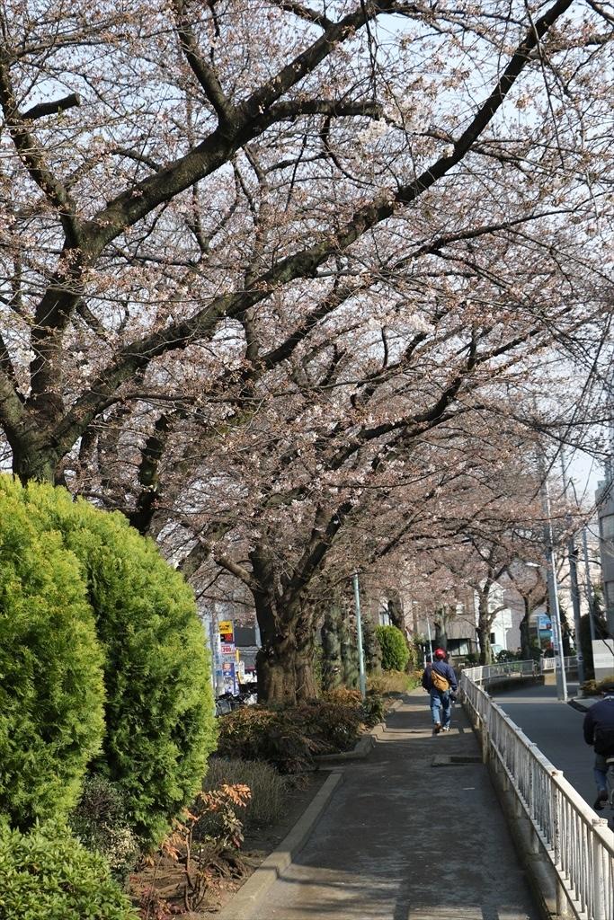 昨30日昼過ぎの桜_2