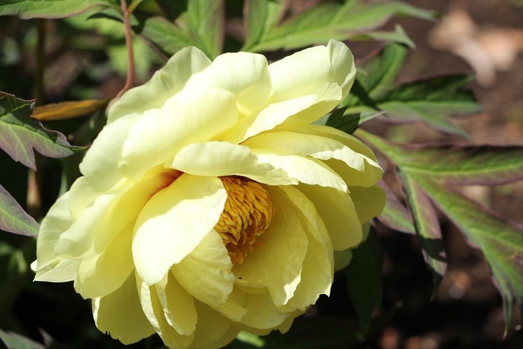境内の花_7
