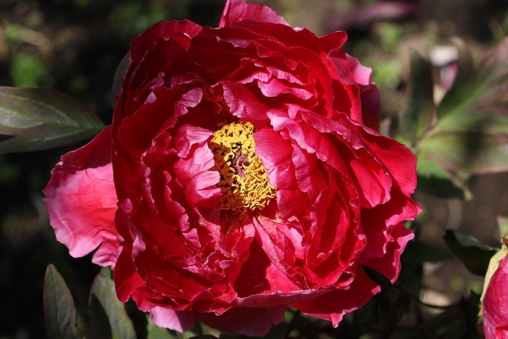 境内の花_10
