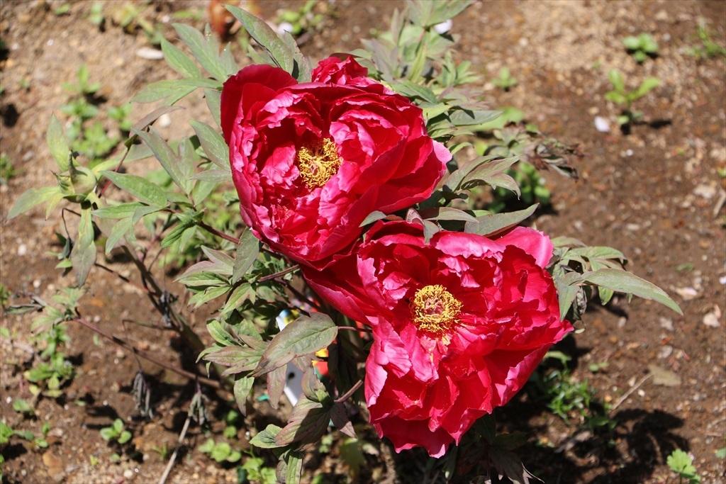 墓苑付近の花さん_1
