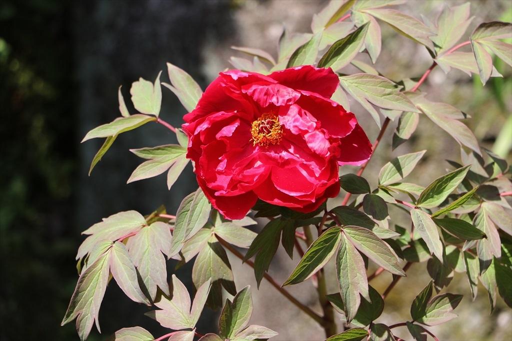 墓苑付近の花さん_2