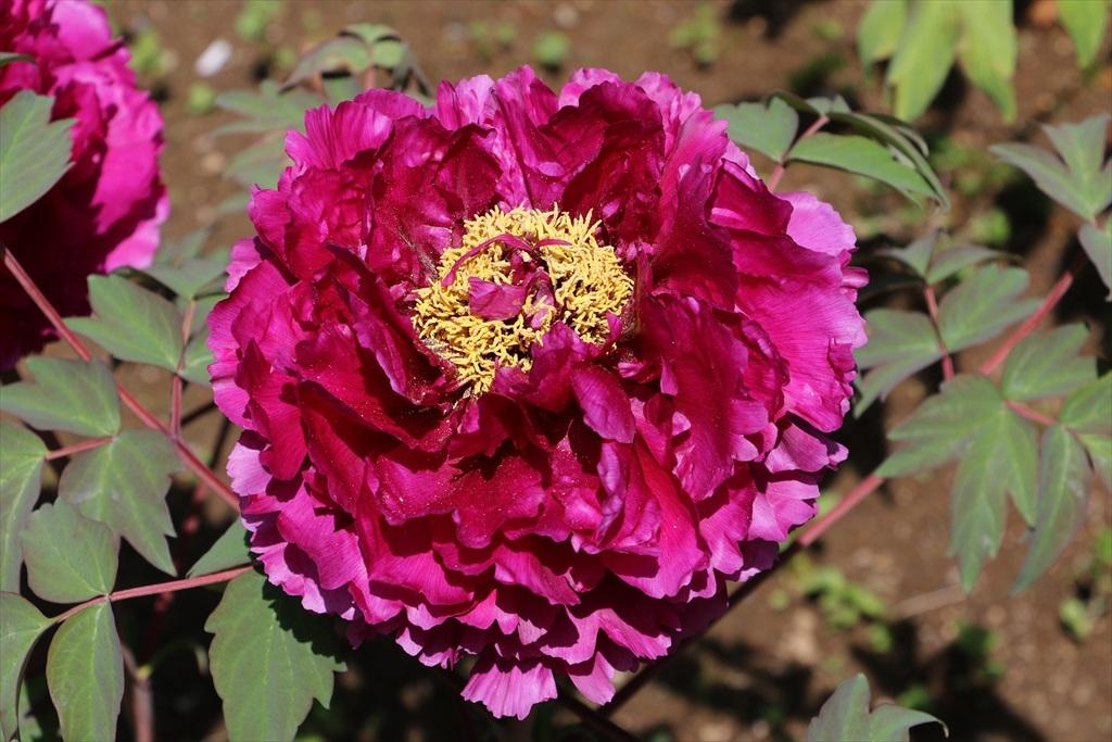 墓苑付近の花さん_4