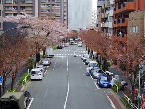 agoyamaquattro19.jpg