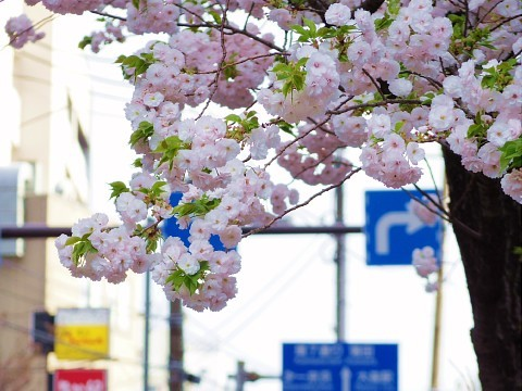 jolunchogawa16.jpg