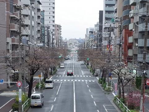 muginaesakura11.jpg