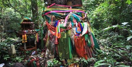 Ta-Kien tree (3)