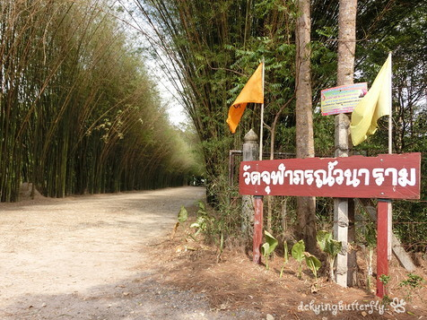 Thai bamboo forest (1)